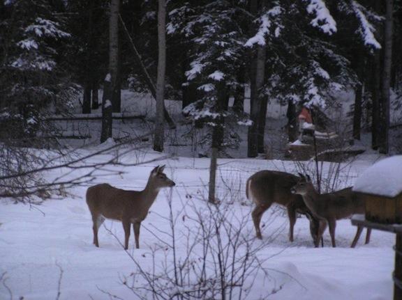Front yard visitors